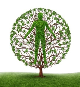 12668178-tree-with-branches-and-green-leaves-in-the-shape-of-a-persons-anatomical-body-on-white