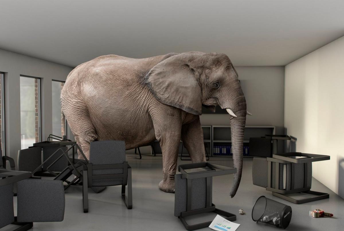 הפיל בחדר המורים – בואו נדבר עליו